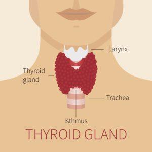 I Have Thyroid Nodules Should I Be Worried Nebraska Medicine