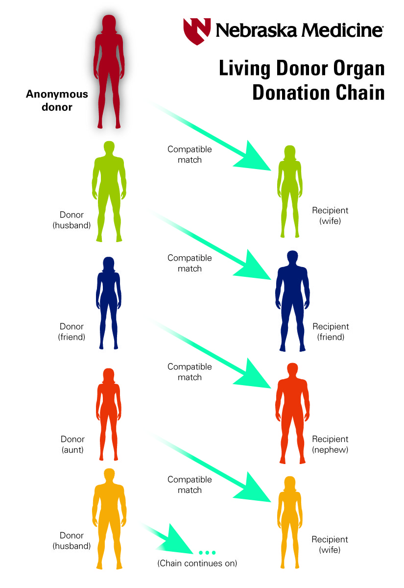 Illustration of how a Living Donor chain works